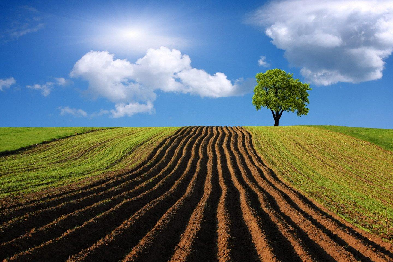 Участок сельскохозяйственного назначения
